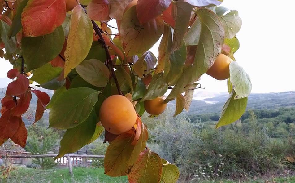 Agricoltura biologica agrituriso in Toscana